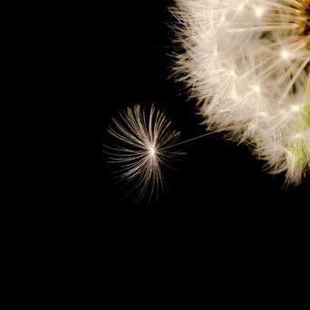 Quando manca il desiderio – dalle Riflessioni di Giorgio Rifelli